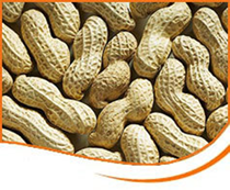 groundnuts large